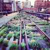 High Line Moment NYC
