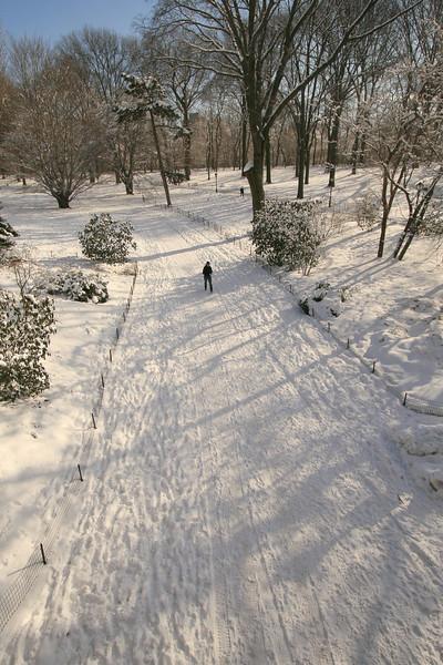 Walking Through Central Park, NY