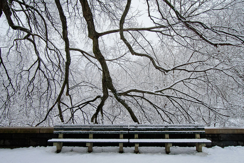 Bench and Branches, NY
