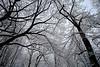 Winter Trees, Central Park, New York NY
