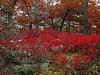 Flaming reds