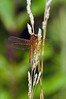 Dragon fly 3