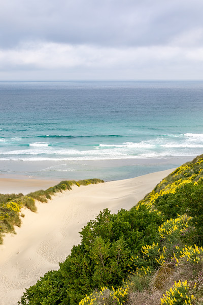 Dunes at Sandfly Bay, Otago Peninsula