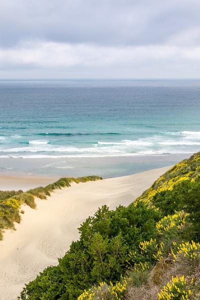 Dunes at Sandfly Bay, Otago Peninsula