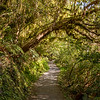 Green tunnel at Routeburn track, Fiordland