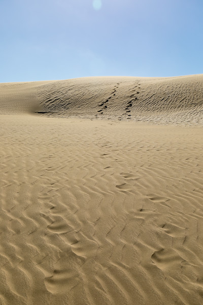 Dunes near Ninety Mile Beach
