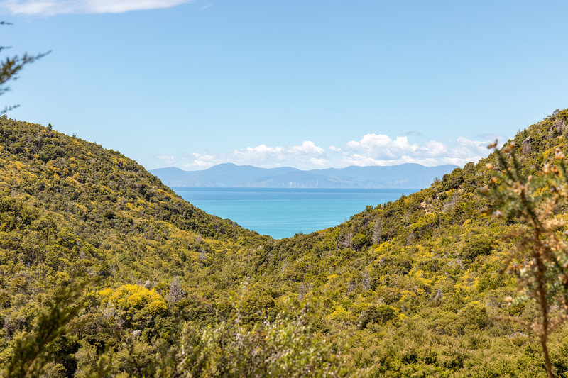 Lush valley in Abel Tasman National Park