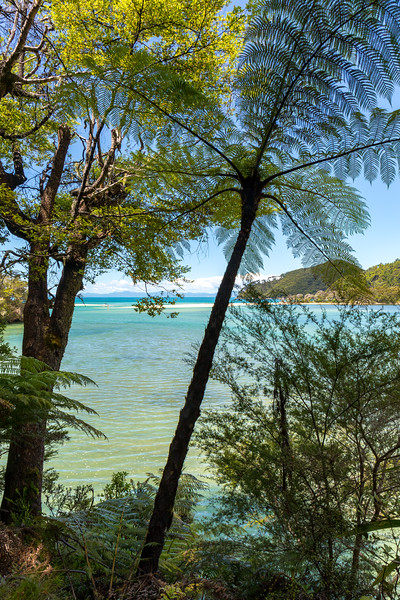 Ferns at Bark Bay, Abel Tasman National Park
