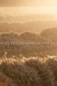 Andy Woods_090305_7733