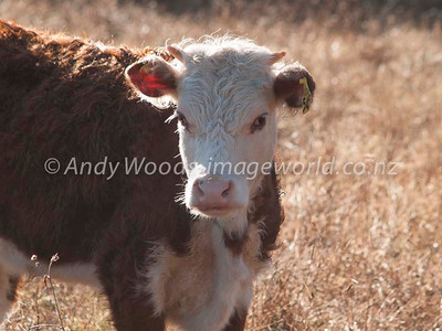 Andy Woods_070915_8