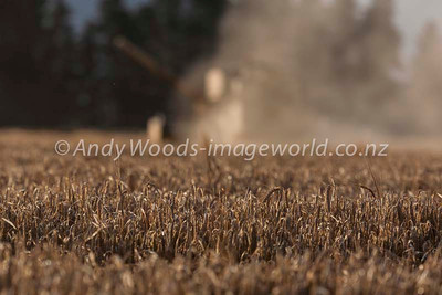 Andy Woods_090305_7693