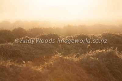 Andy Woods_090305_7732