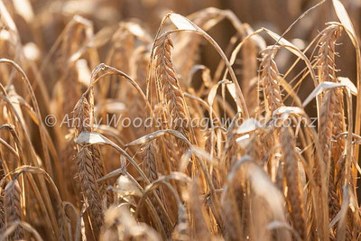 Andy Woods_090305_7695