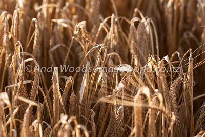 Andy Woods_090305_7689