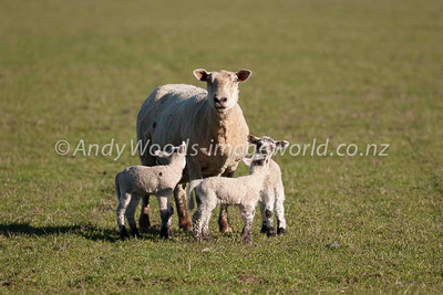 Andy Woods_080913_3172