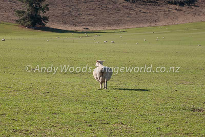 Andy Woods_080913_3167