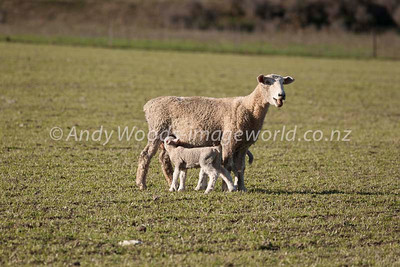 Andy Woods_080913_3171