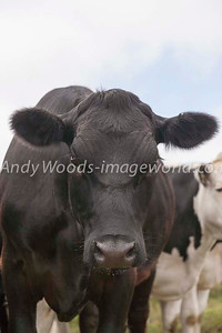 Andy Woods_081226_6320