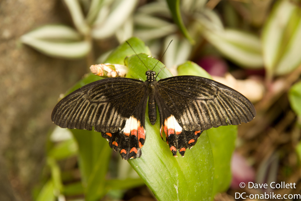 Still butterflies