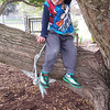 Lucas in a tree at kindy :-)