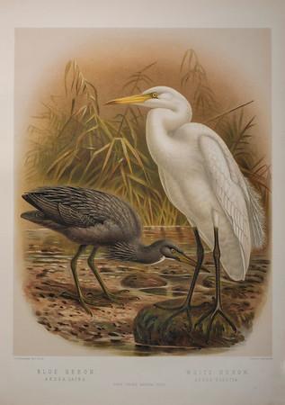 NZ Heritage Prints