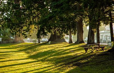 Naseby - sunlight through the trees