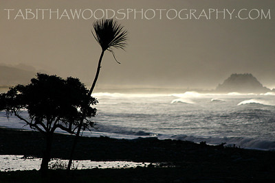 Tabitha Woods Photography- White Rock03