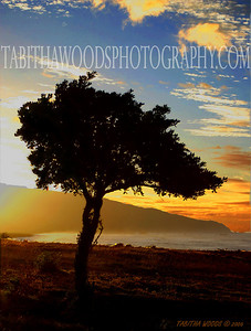 Tabitha Woods Photography- Manuka Tree01