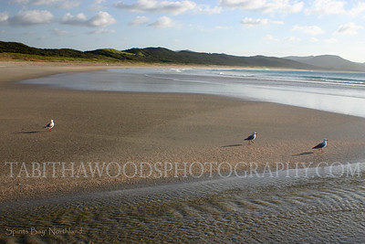 Tabitha Woods Photography- Spirits Bay01