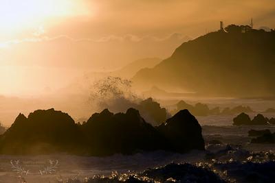Wellington photographer
