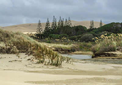 North Island Landscapes
