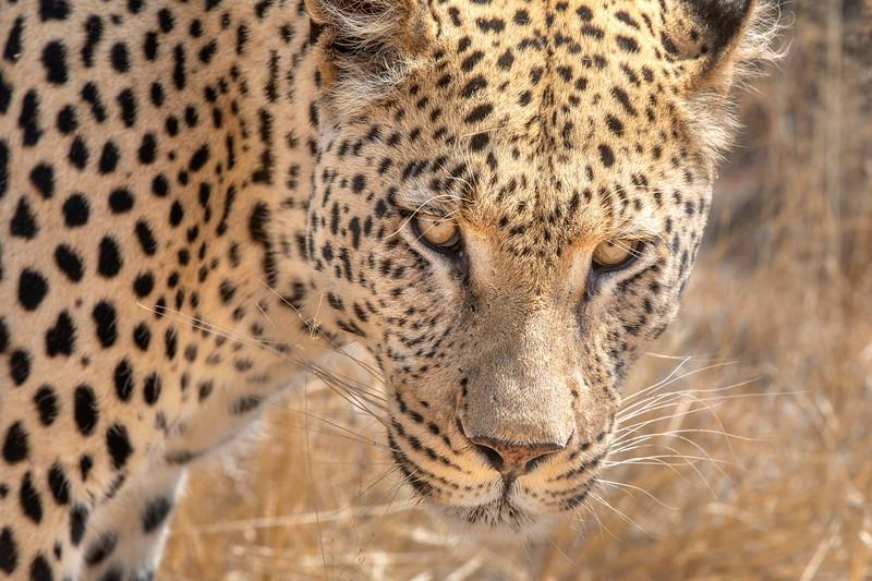 Namibia 69A9553.jpg