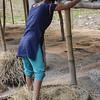 Threshing rice on Majuli Island.