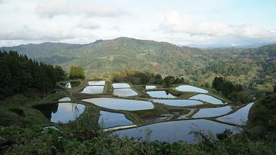 The koi ponds of Yamakoshi