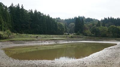 One of the koi ponds of Shintaro koi farm