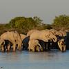 Herd of elephants at Klein Namutoni Water Hole, Etosha National Park