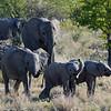 Elephant family, Etosha National Park