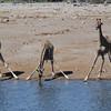 Giraffes, Klein Okevi Water Hole, Etosha National Park