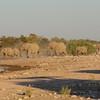 Herd of elephants marching to Klein Namutoni Water Hole, Etosha National Park