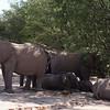 Desert Elephants, Aba-Huab Riverbed, Damaraland