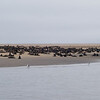 Cape Fur Seals, Pelican Point, Walvis Bay