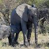 Mother with baby elephant, Etosha National Park