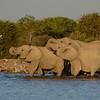 Elephants at Klein Namutoni Water Hole, Etosha National Park