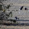 Southern Yellow Billed Hornbills, Etosha National Park