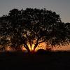 Sunrise, Sossusvlei, Namib Naukluft National Park