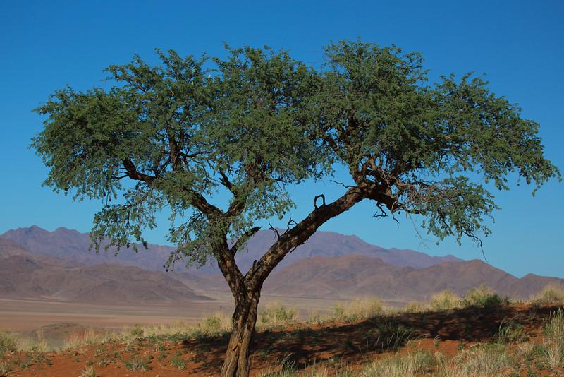 NamibRand reserve area 2014-03-17 at 08-03-59