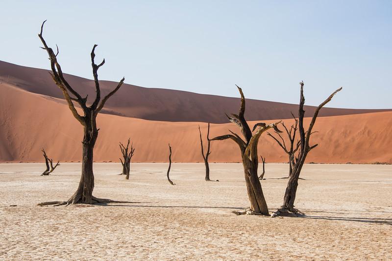 Dead vlei trees_8_NBA_5903