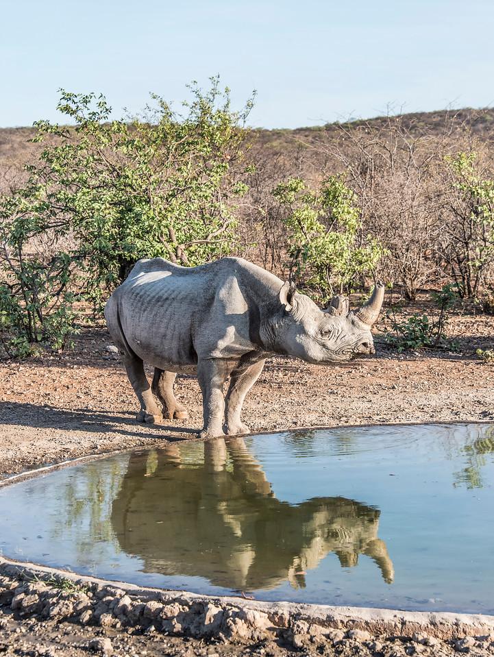 Rhino-vertical_NBA_3838