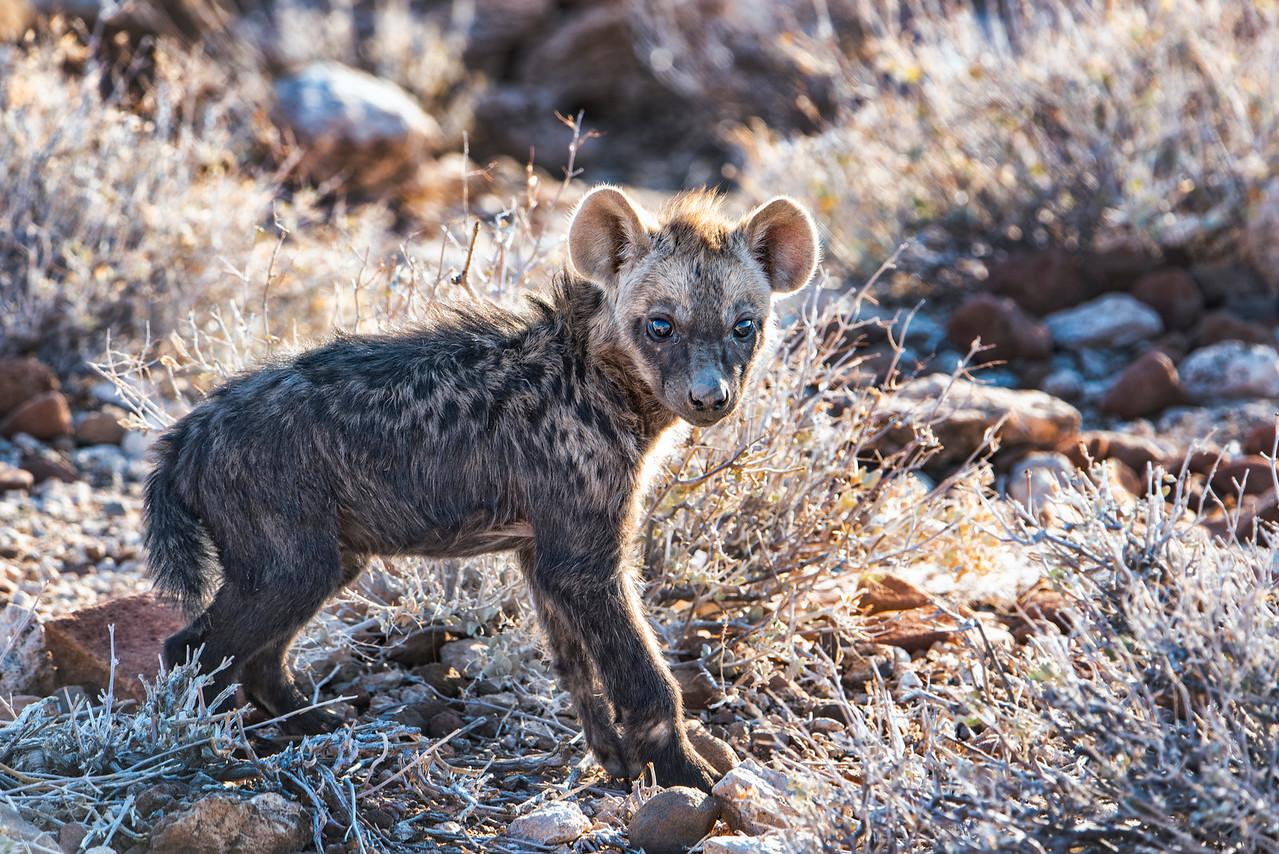 Hyena_Cub_NBA_0097