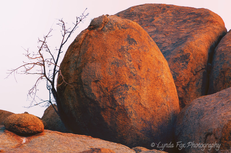 Young Tree Supported By Boulders